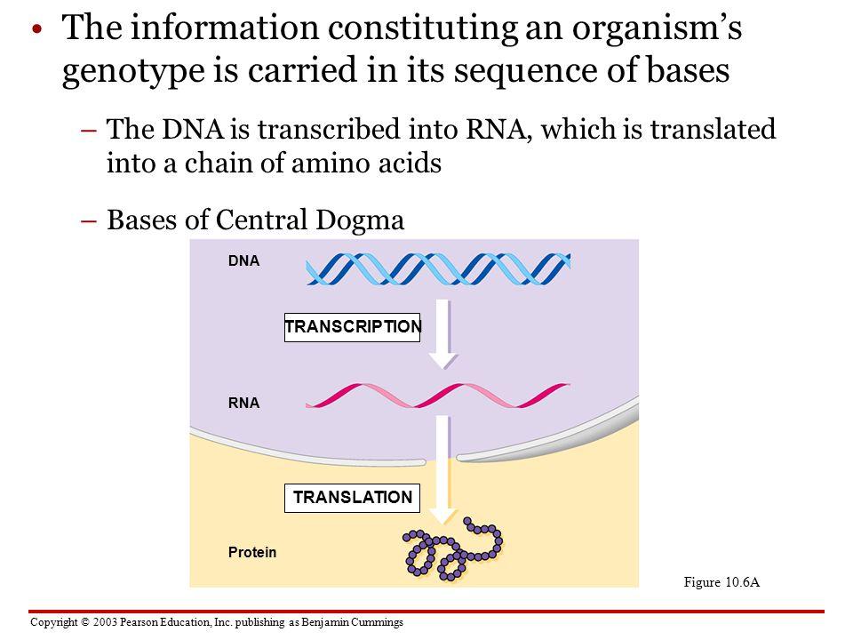 1 Dna Rna Structure 2 Transcription Translation Ppt Video