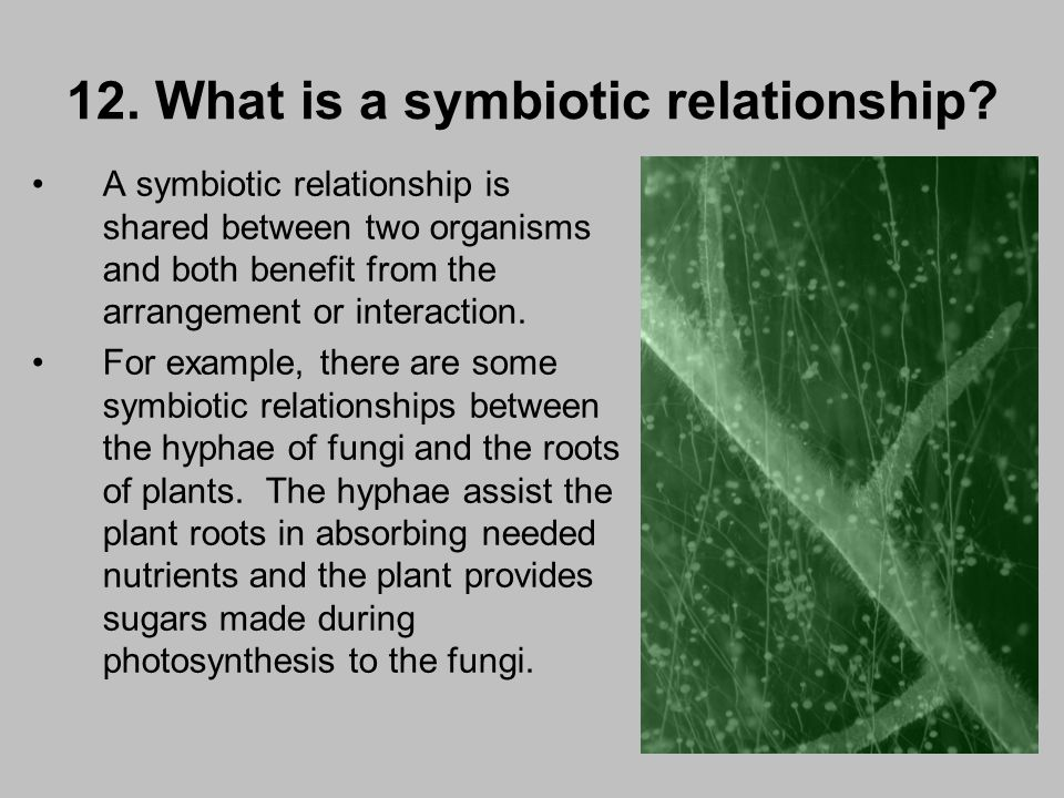 what is a symbiotic relationship in humans
