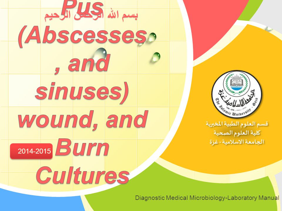 Pus (Abscesses, and sinuses) wound, and Burn Cultures - ppt video