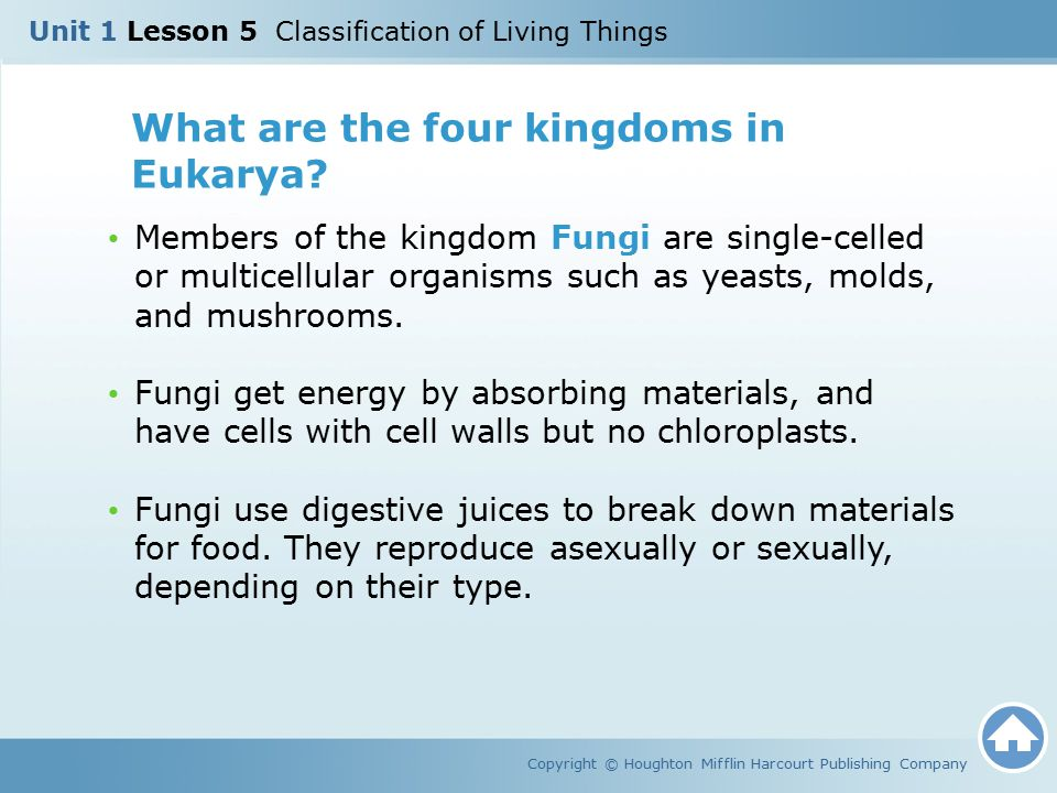 What are the four kingdoms in Eukarya