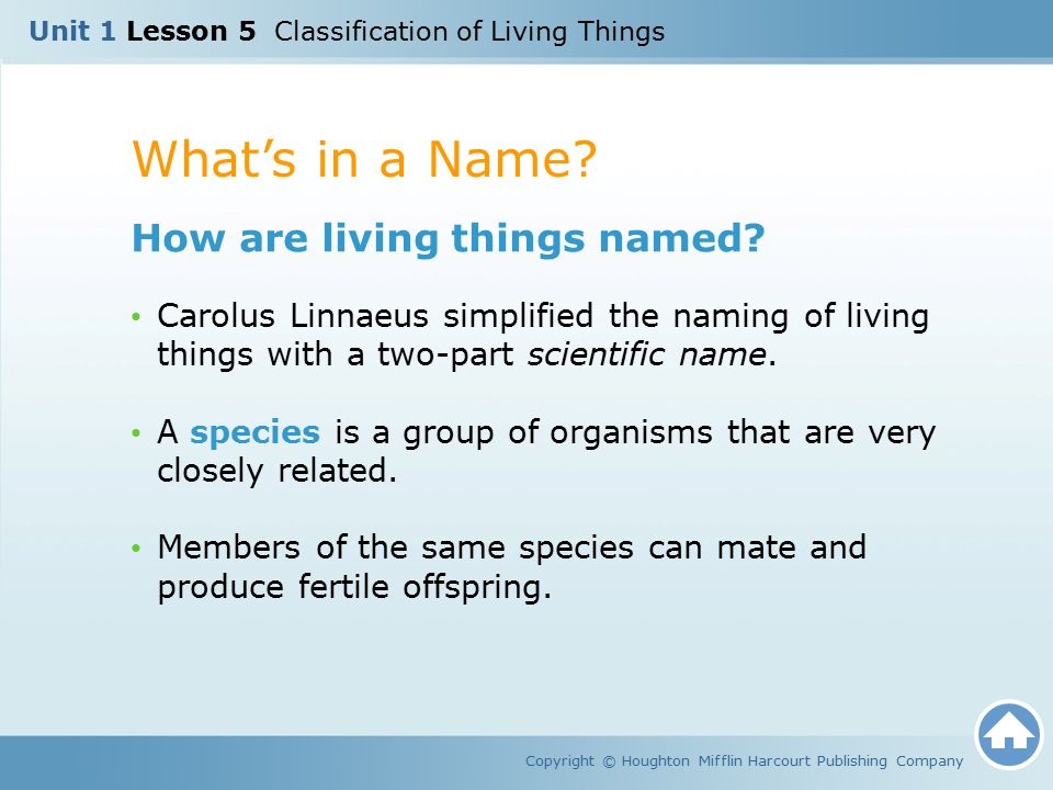 What's in a Name How are living things named