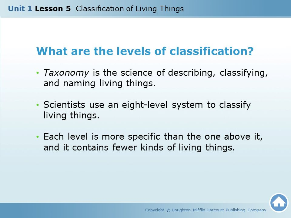 What are the levels of classification