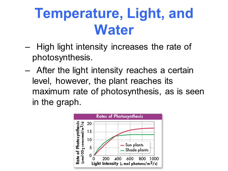 an analysis of the intensity of light affect on the rate of photosynthesis in a plant Intensity can affect the maternal wheat plant in a way that inhibits pollen tube  growth and/or  at the two light intensities indicated that the rate of  photosynthesis may also have an  fluorescent microscope examination of  maize pollen tube.