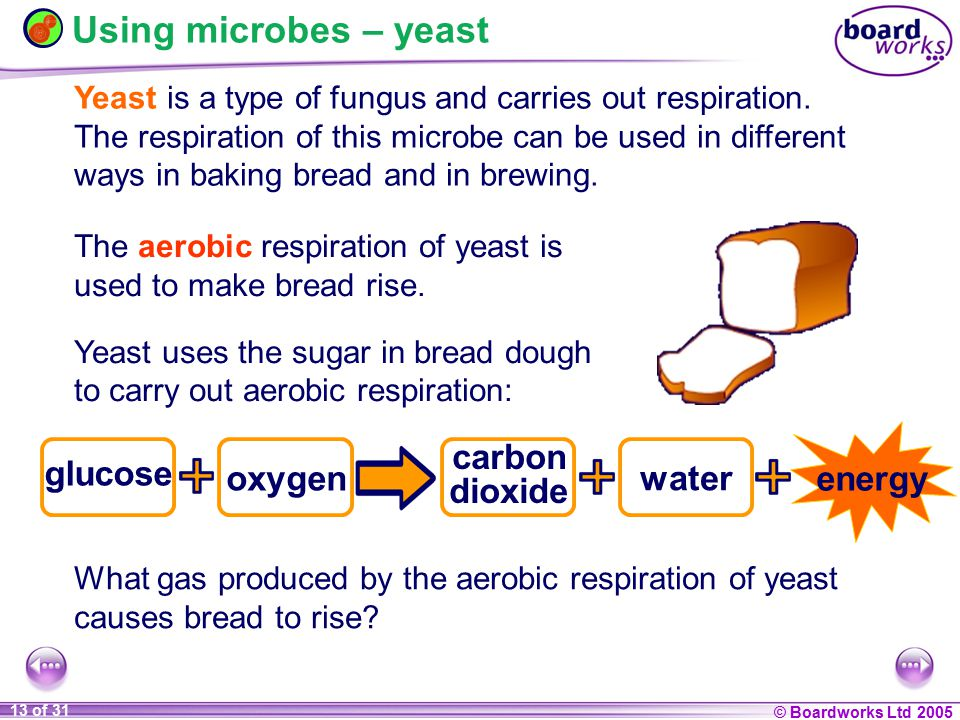 Using microbes – yeast energy carbon glucose oxygen water dioxide