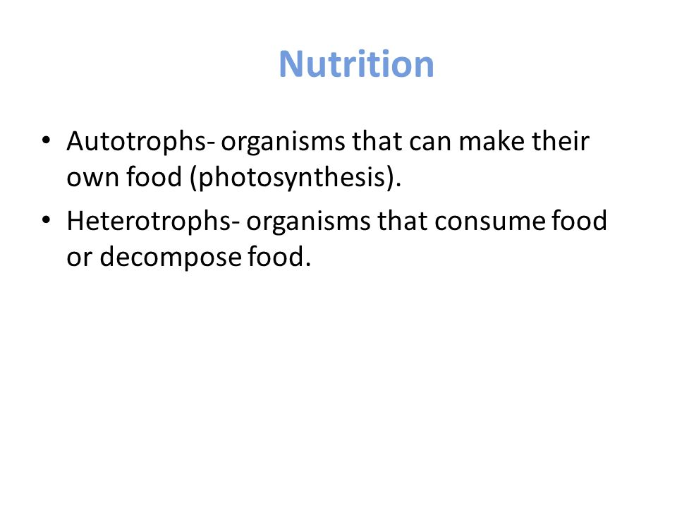 Which Organism Makes Their Own Food