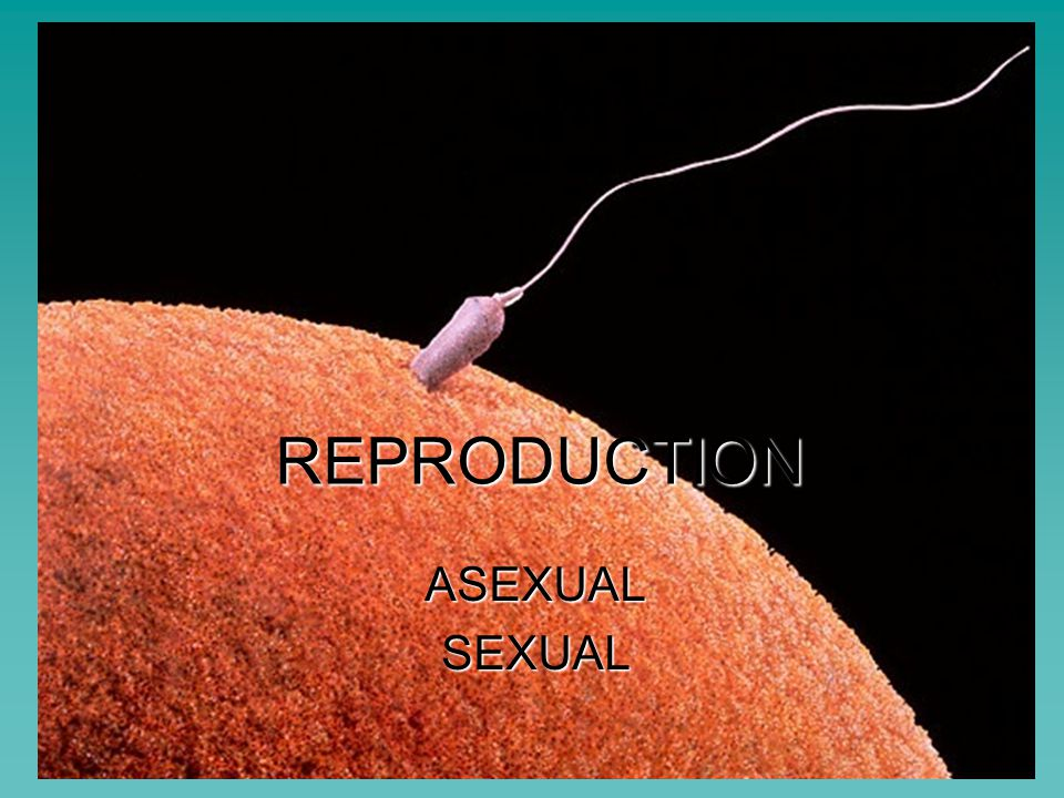 reproductin asexual or sexual List of disadvantages of asexual reproduction 1 it can hinder diversity take note that asexual reproduction does not have genetic diversity on the other hand, this is a main advantage with sexual reproduction, since mixing a gene pool produces diversity.