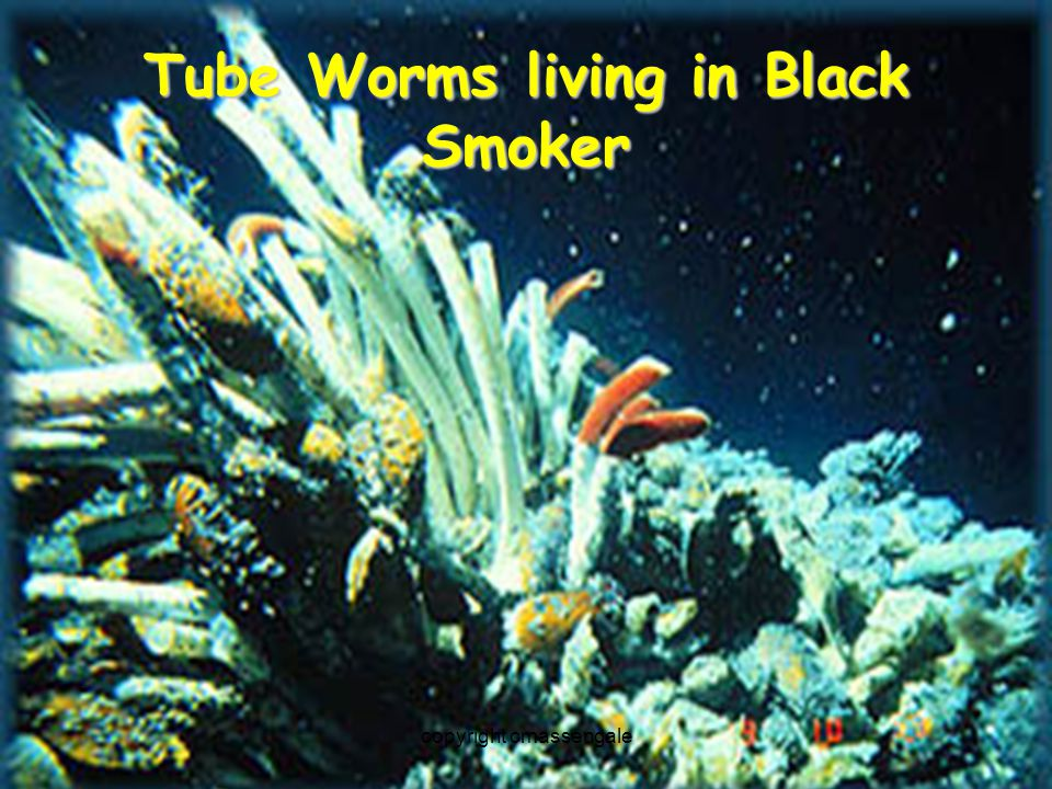 chemosynthesis black smokers Chemosynthetic bacteria are organisms whose primary source of  sulfate  metals, form chimney-like structures known as black smokers.