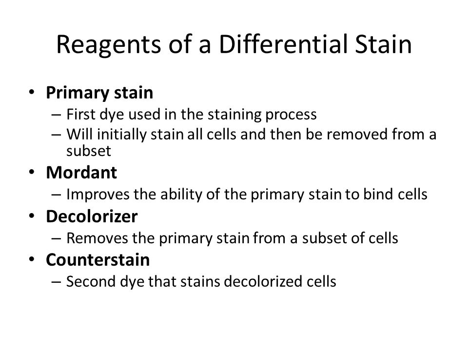 microbiology lab differential staining Microbiology simple stain and differential stain by kesha_gopal in types  school work, bacteria, and ecoli.