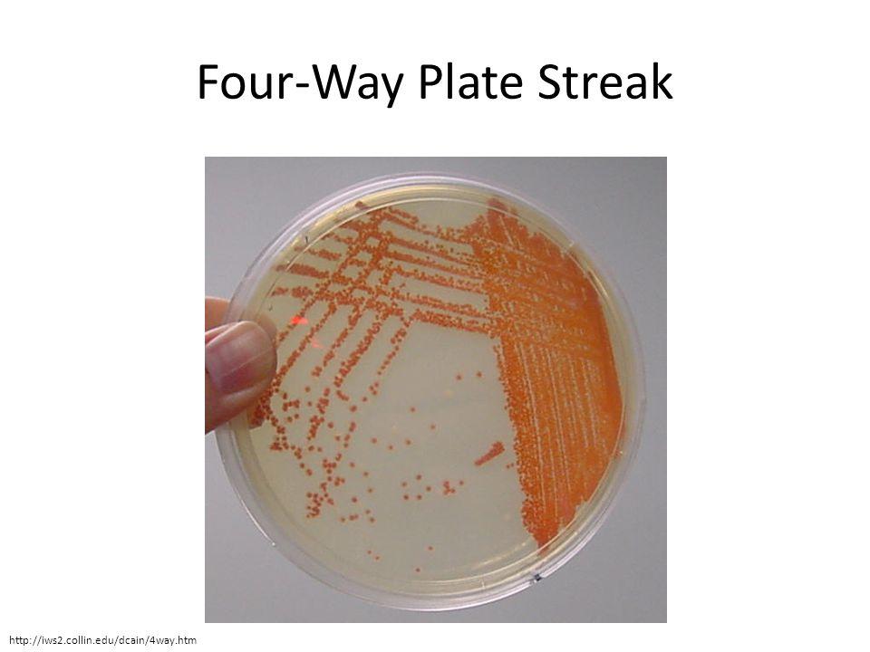 Klebsiella Pneumoniae Nutrient Agar Review for Lab P...