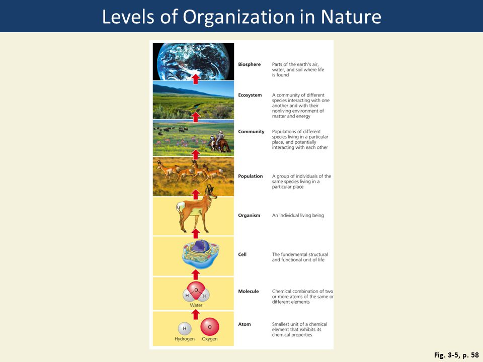 the five levels of organization in Structure and function in living systems 5 the anatomy and physiology of plants and animals illustrate the complementary nature of structure and function as a basis for understanding this concept: a.