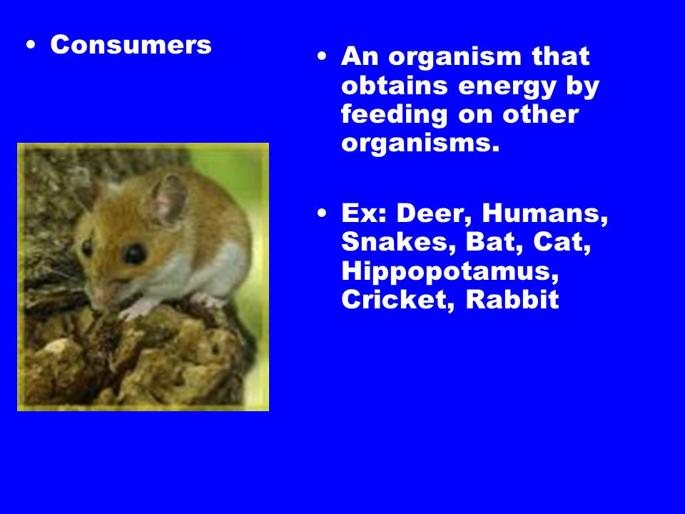 Consumers An organism that obtains energy by feeding on other organisms.
