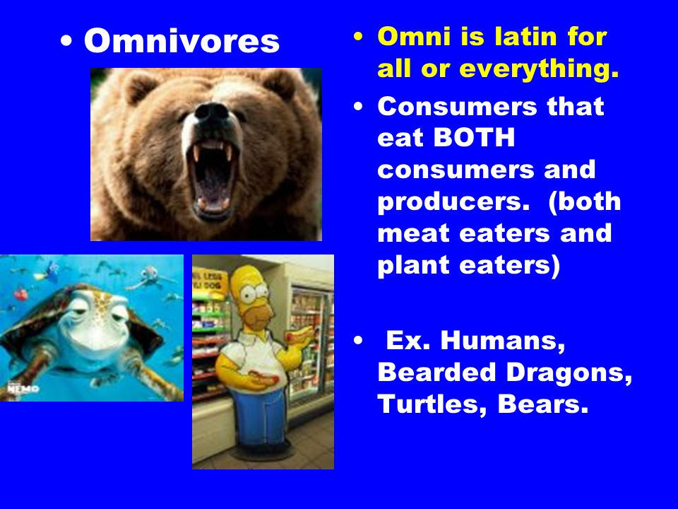 Omnivores Omni is latin for all or everything.