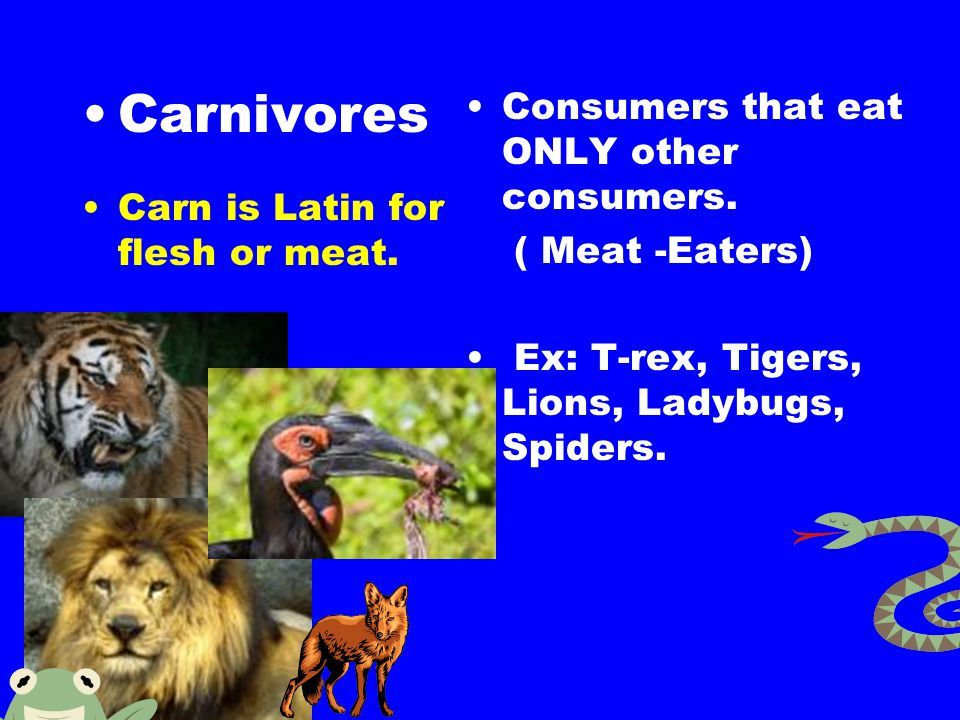 Carnivores Consumers that eat ONLY other consumers.