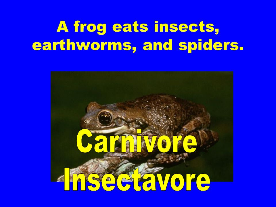 A frog eats insects, earthworms, and spiders.