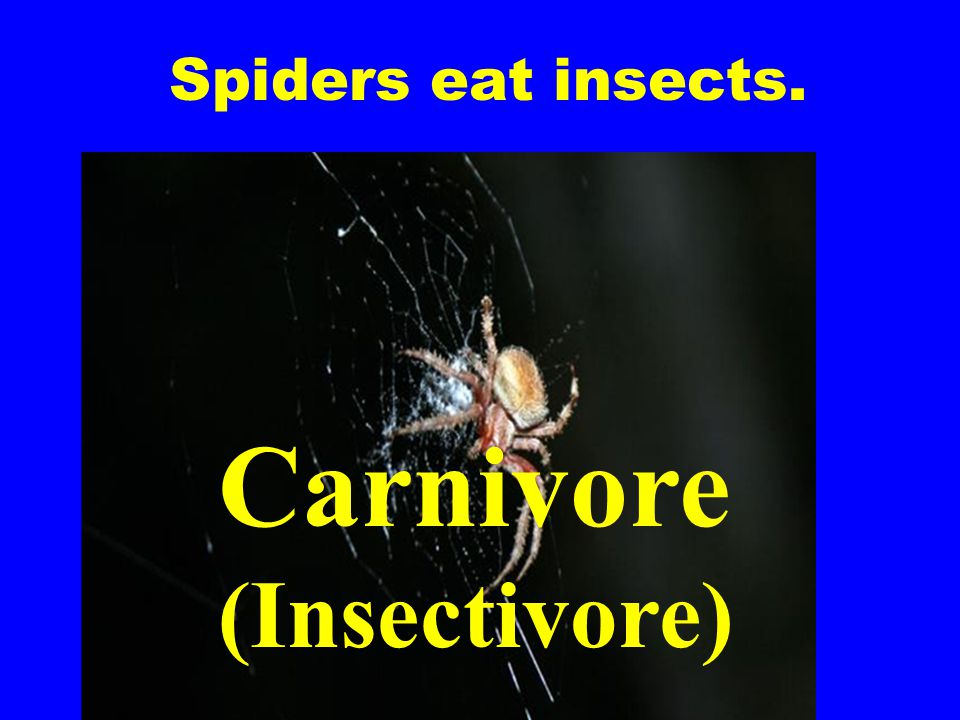 Spiders eat insects. Carnivore (Insectivore)
