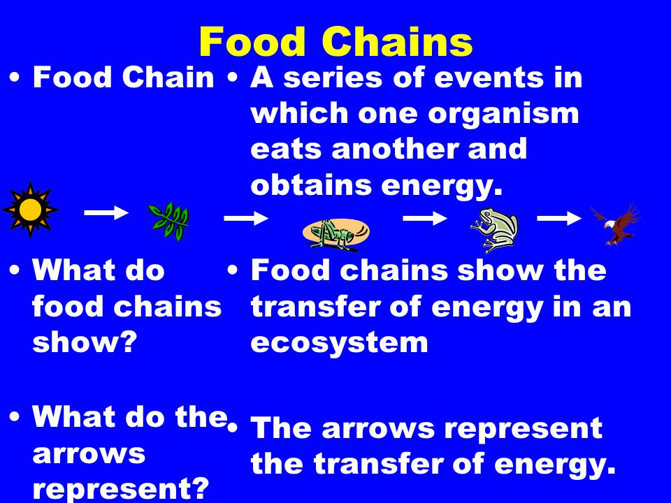 Food Chains Food Chain What do food chains show