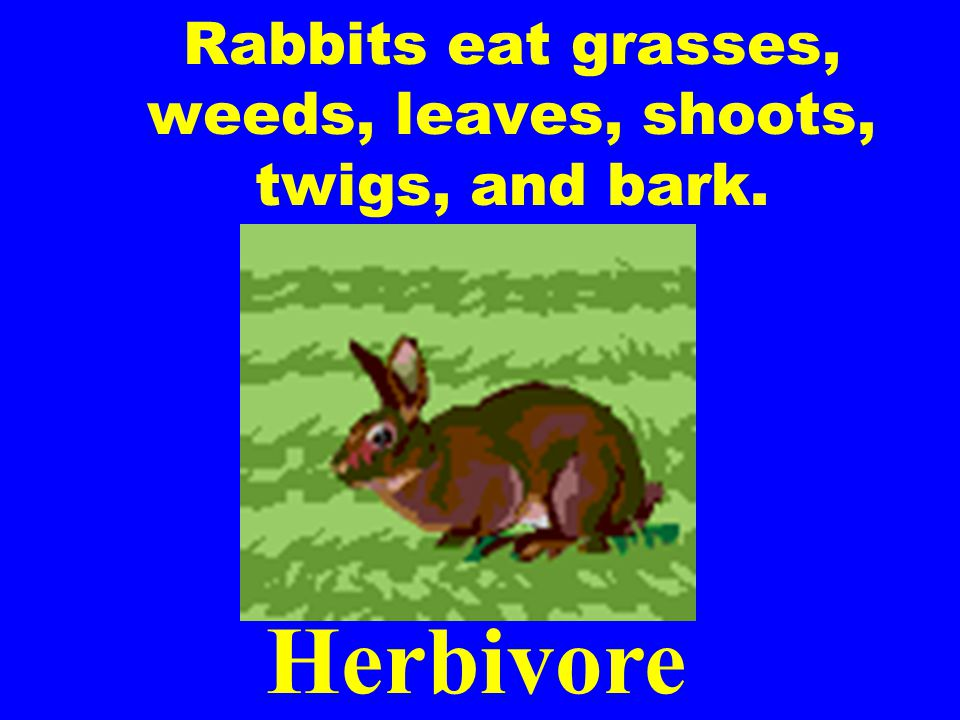 Rabbits eat grasses, weeds, leaves, shoots, twigs, and bark.