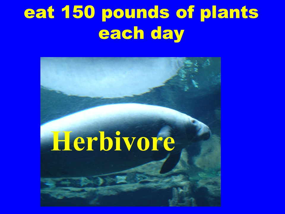 eat 150 pounds of plants each day