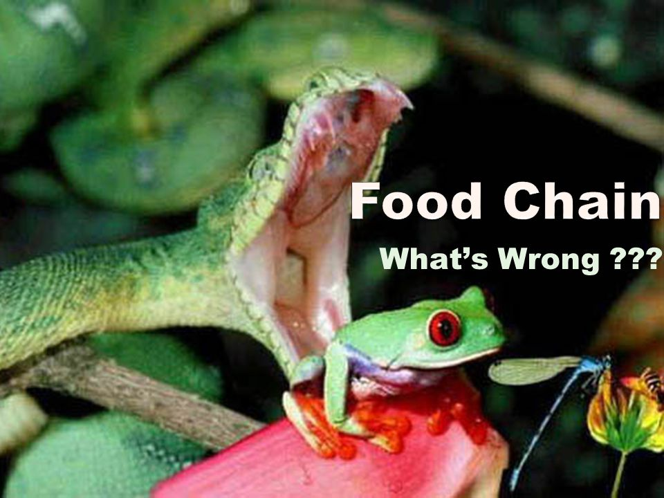 Food Chain What's Wrong