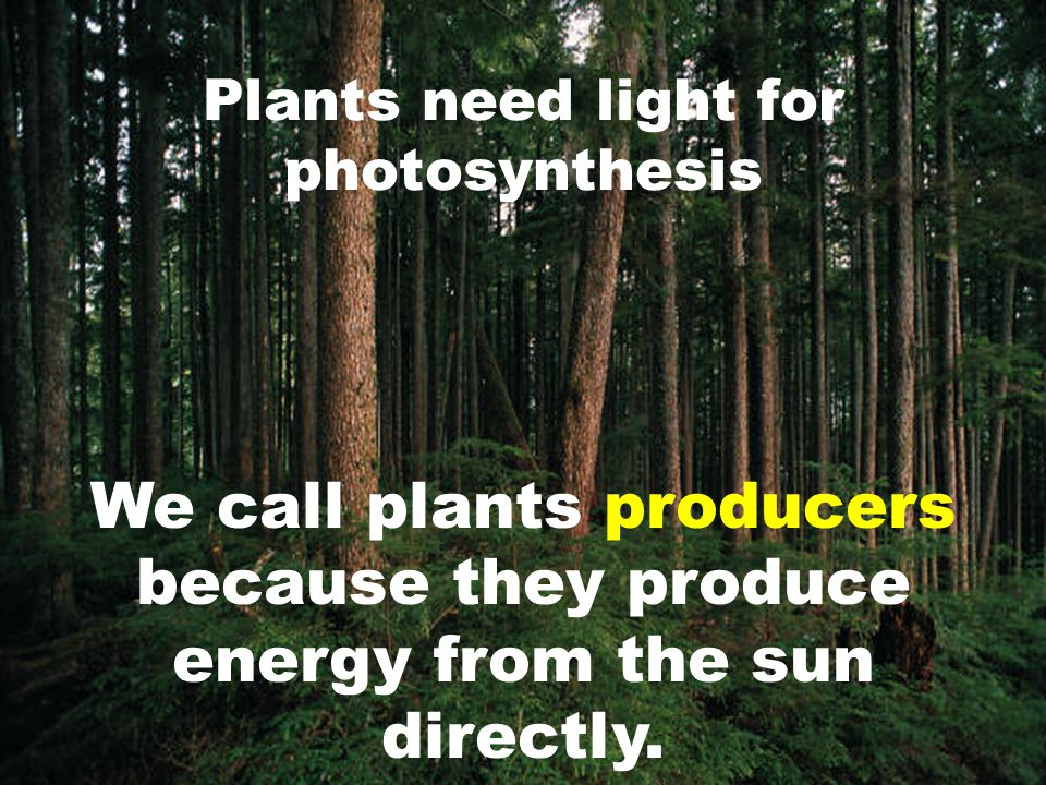 Plants need light for photosynthesis