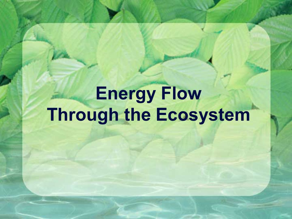 Energy Flow Through the Ecosystem