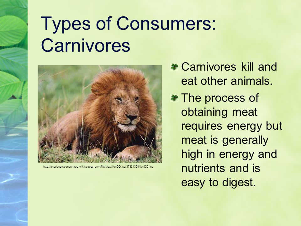 Types of Consumers: Carnivores
