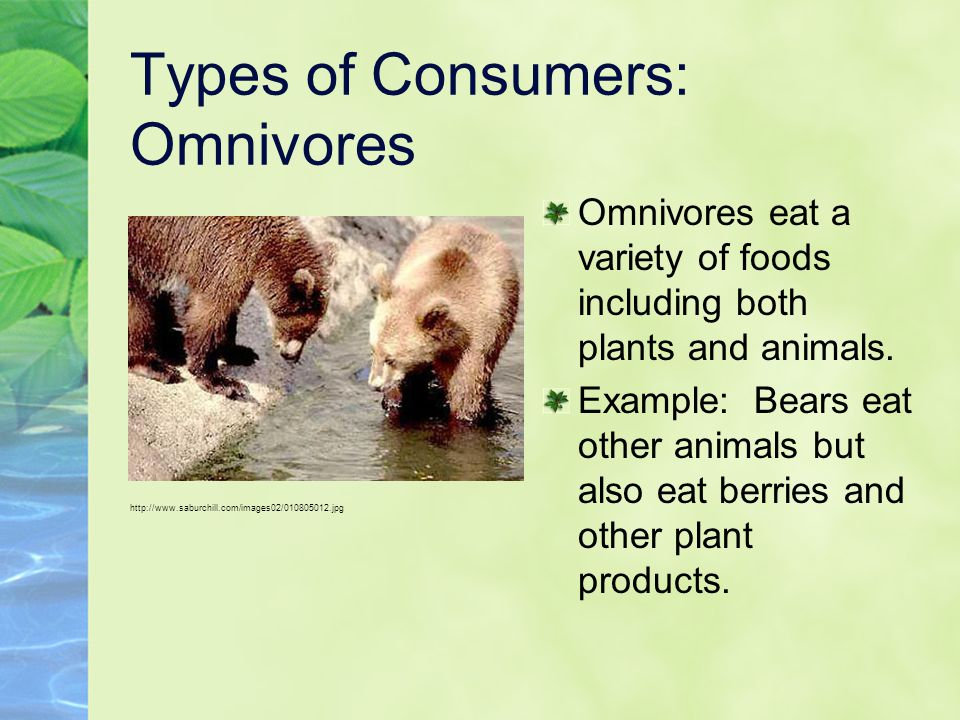 Types of Consumers: Omnivores