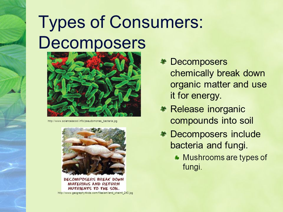 Types of Consumers: Decomposers