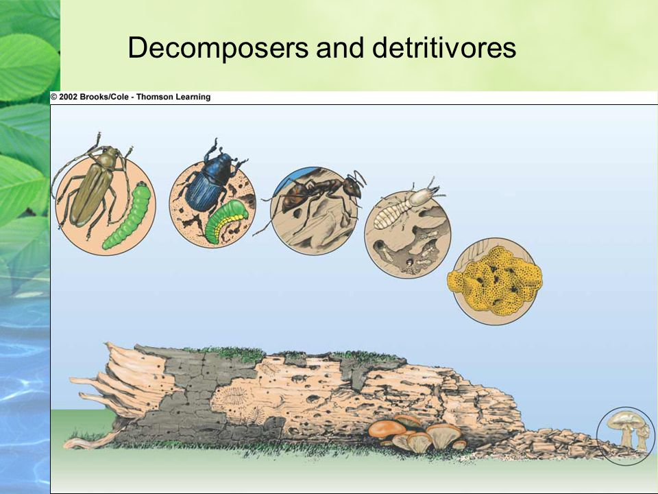Decomposers and detritivores