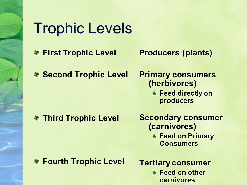 Trophic Levels First Trophic Level Second Trophic Level