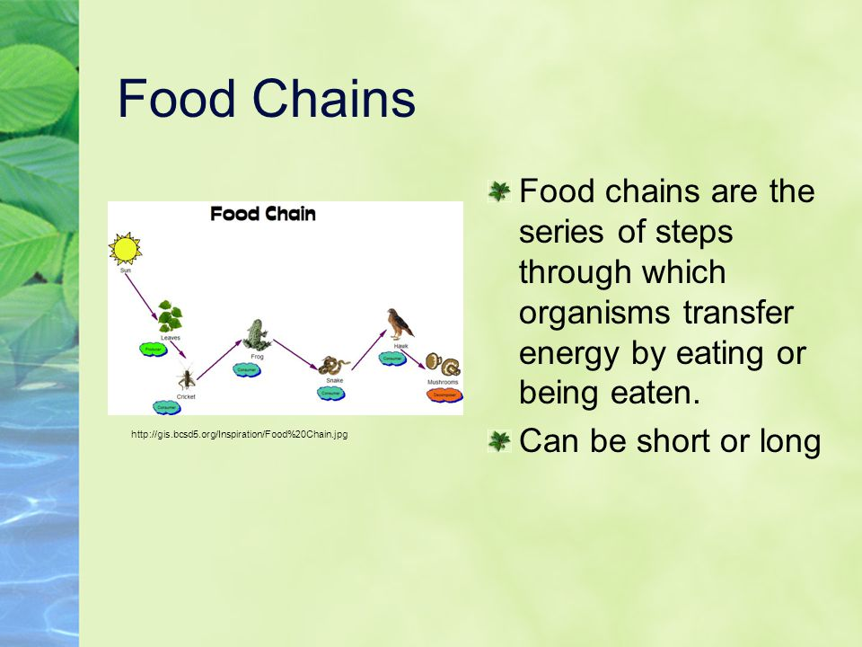 Food Chains Food chains are the series of steps through which organisms transfer energy by eating or being eaten.