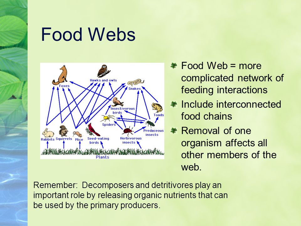 Food Webs Food Web = more complicated network of feeding interactions