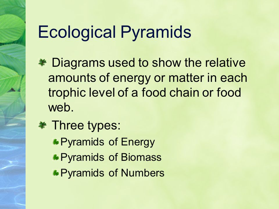 Ecological Pyramids Diagrams used to show the relative amounts of energy or matter in each trophic level of a food chain or food web.