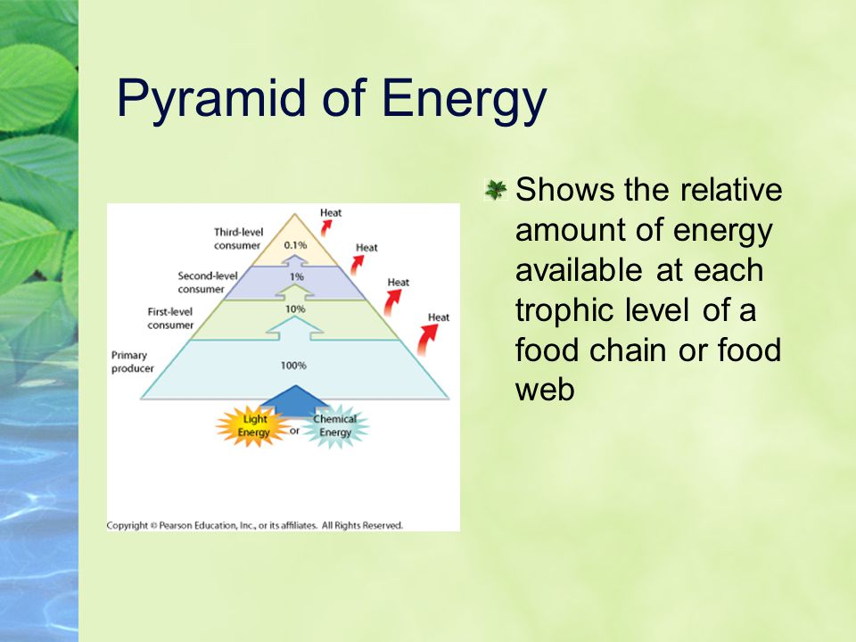 Pyramid of Energy Shows the relative amount of energy available at each trophic level of a food chain or food web.