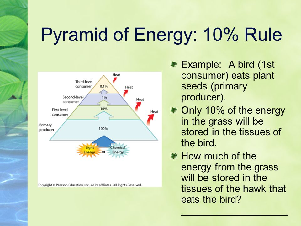 Pyramid of Energy: 10% Rule
