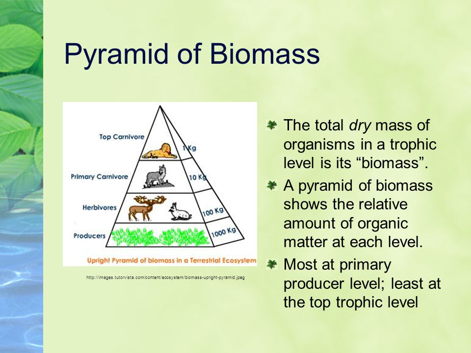 Pyramid of Biomass The total dry mass of organisms in a trophic level is its biomass .