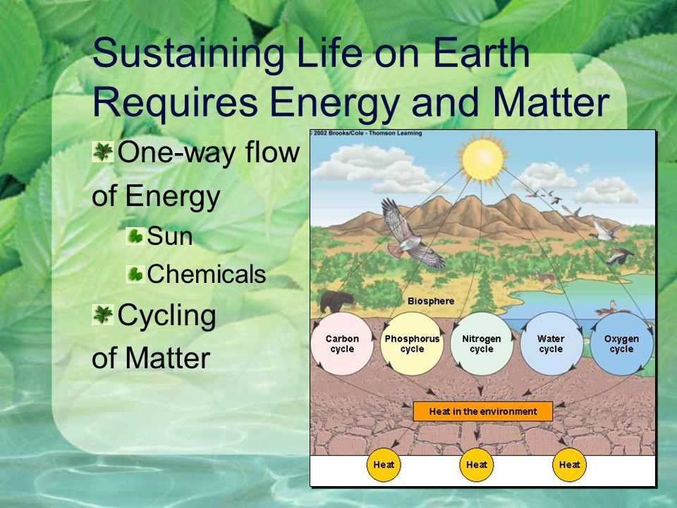 Sustaining Life on Earth Requires Energy and Matter