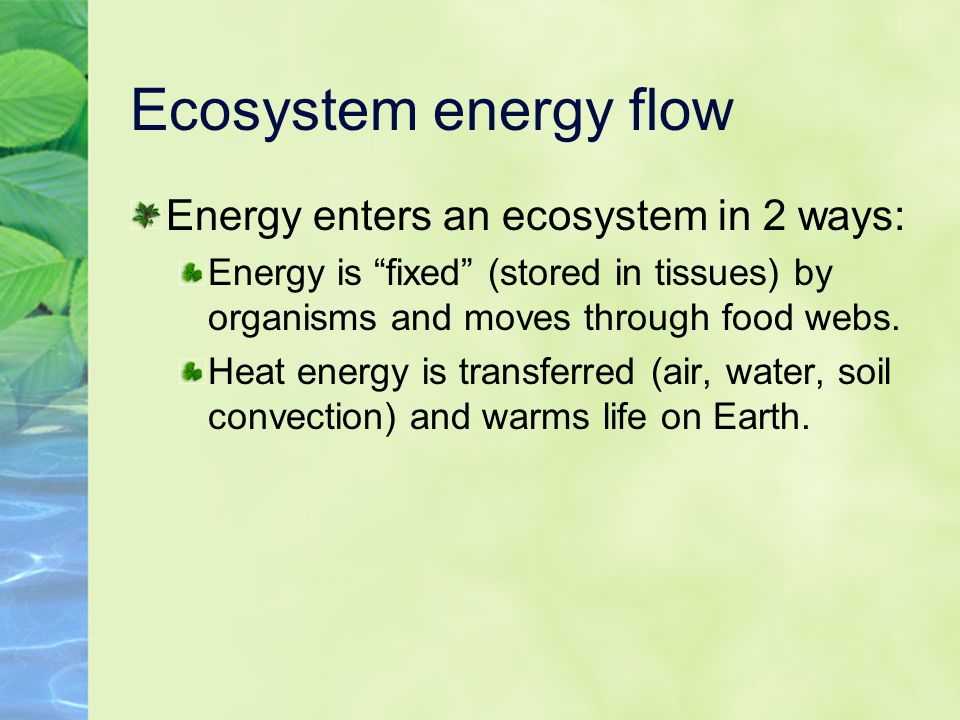 Ecosystem energy flow Energy enters an ecosystem in 2 ways: