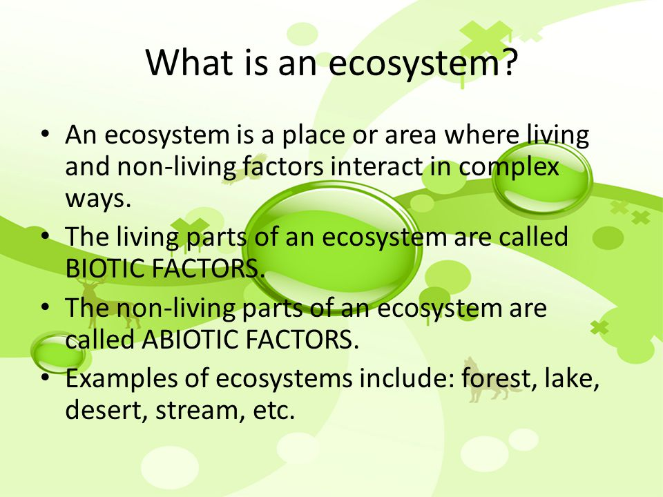 ecosystem a natural systems which are constantly changing among their living and nonliving parts and Plant parts and animals store water in their parts, as we do water is used by plants to make food heat energy (temperature) is needed for plants to grow and for our.