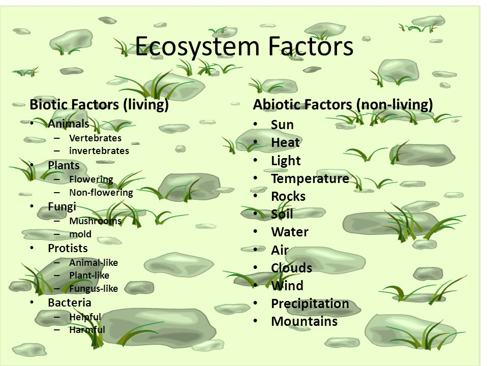 Ecosystems Questions including Why is important that
