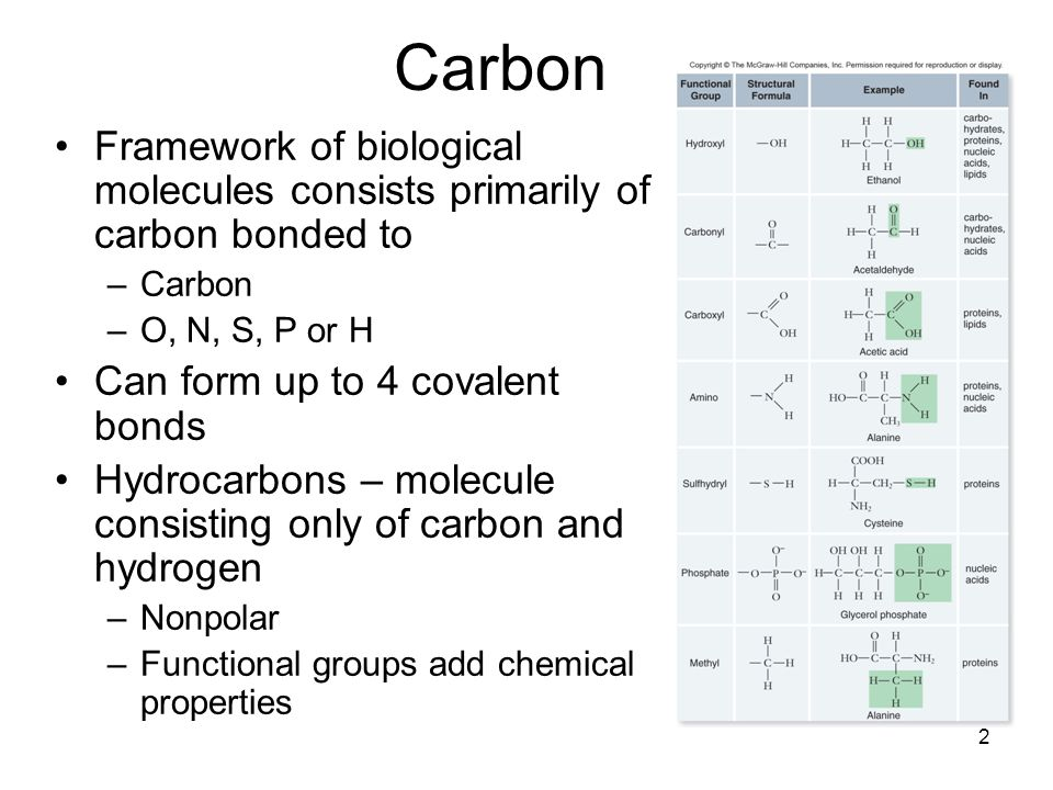 Biological molecules review worksheet