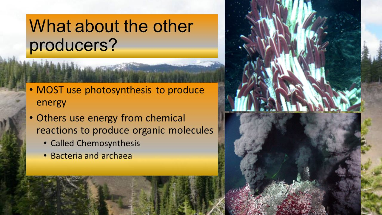 where does the energy come from in chemosynthesis The formation by cells of carbohydrates from carbon dioxide and water with energy obtained from some chemical reaction, rather than from light as in photosynthesis inorganic nutrients produced at the bottom of marine habitats, oceans or seas.