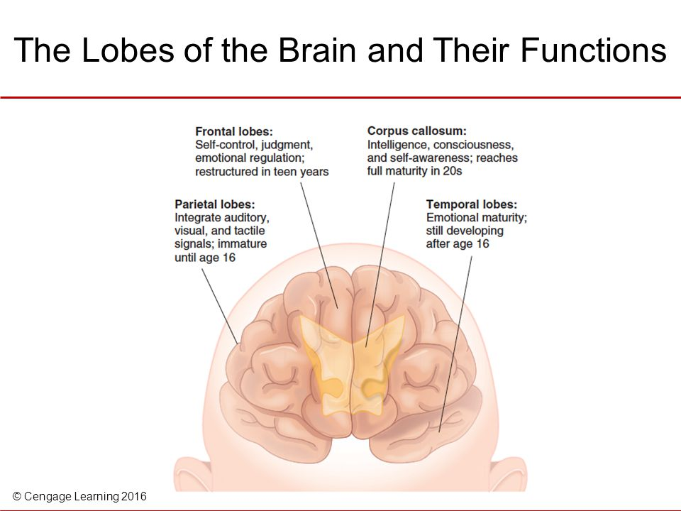 lobes of the brain and their associated functions Brain lobes overview frontal lobe  some of the many functions of the frontal lobe  most people experience some atrophy in the frontal lobe in their.