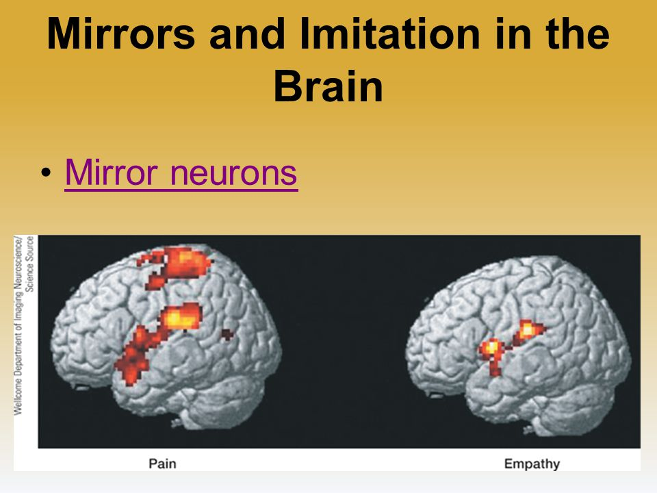 Myers psychology for ap 2e ppt download for Mirror neurons psychology definition