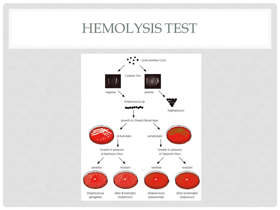 hemolysis lab report Differentiate the types of hemolysis that can microbiology lab question i'm in desperate need of help w/the following question, please help report.