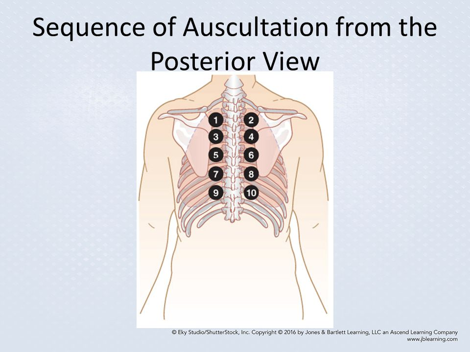Sequence of Auscultation from the Posterior View