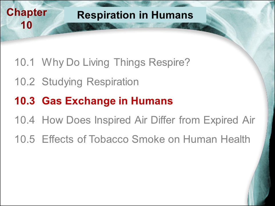 gas exchange in humans essay Previous ib exam essay questions: unit 12 state the differences between ventilation and gas exchange in humans 4 marks sl ventiallation: 2 max movement of air.