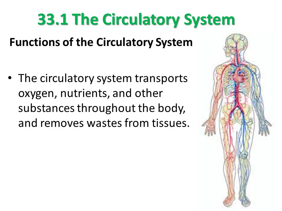 venn diagram circulatory system image collections how to guide and refrence. Black Bedroom Furniture Sets. Home Design Ideas