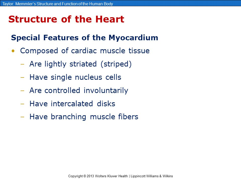 the characteristics of the heart as an organ The functions and characteristics of these cells will be explained in this document  including all of the many specialized cell types and organs such as the heart.