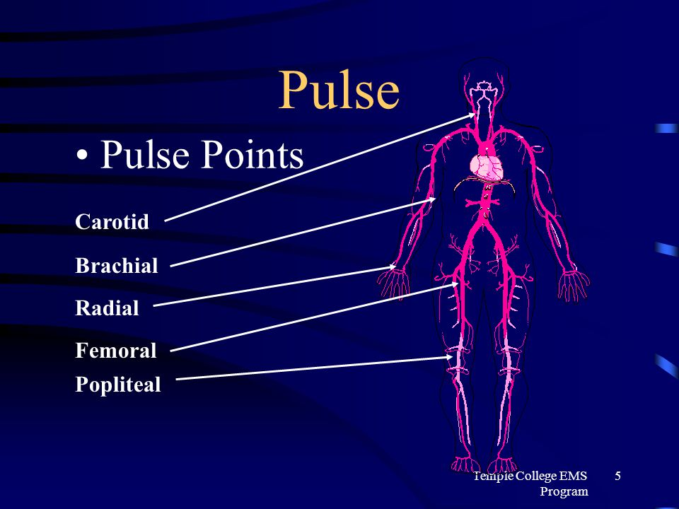 Peripheral Vascular Examination furthermore Clinical Presentation In Respiratory System Disease additionally 5276825 furthermore F 4 Phantoms Of The Japanese Air Self Defense Force as well File callosobruchus maculatus dorsal. on dorsal pulse